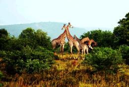 成都起止:银沙蓝海南非迪拜10日游